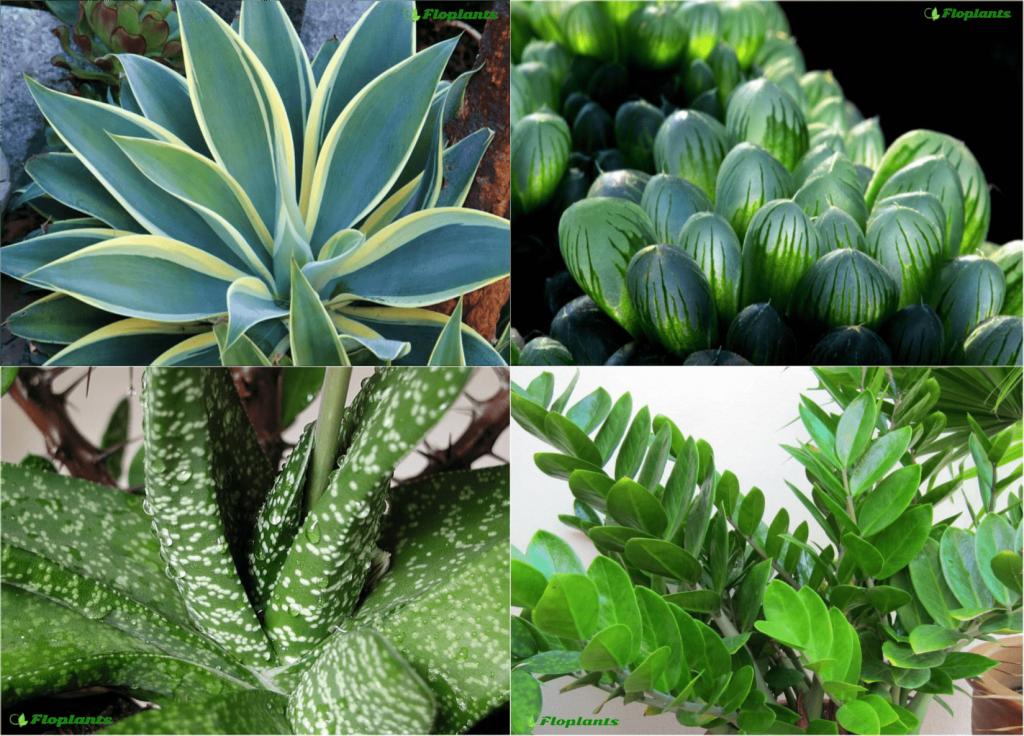 комнатные растения нецветущие фото и названия