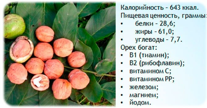 Лечебные свойства маньчжурского ореха. описание, применение. фото — ботаничка.ru