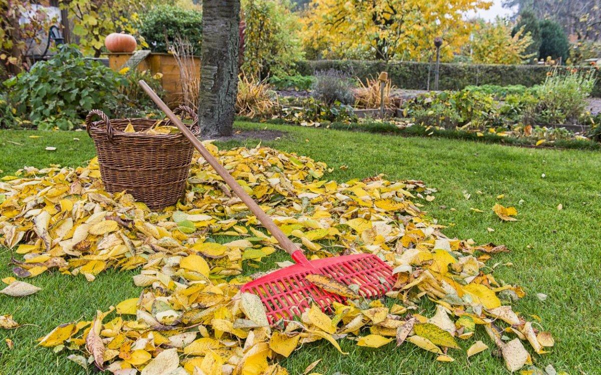 надо ли убирать листву осенью на даче