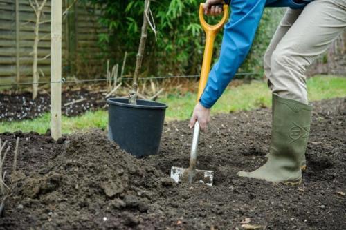 Правила посадки яблонь на урале весной и осенью - сажаем своими руками с yabloki.site