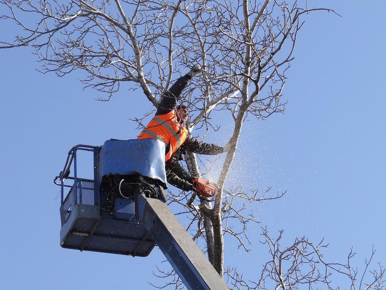 Штраф за незаконную вырубку деревьев в 2019 году