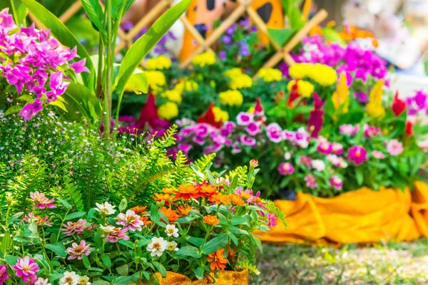 Клумба из многолетников непрерывного цветения: схемы посадки для начинающих с описанием цветов