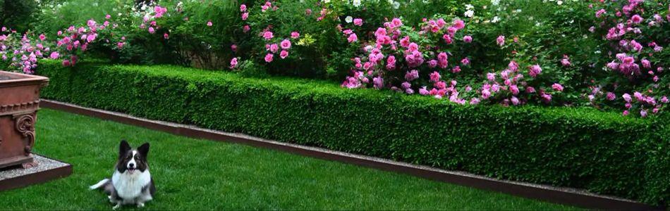 Низкорослые бордюрные цветы: фото и названия многолетних сортов разной высоты, советы по планировке и уходу
