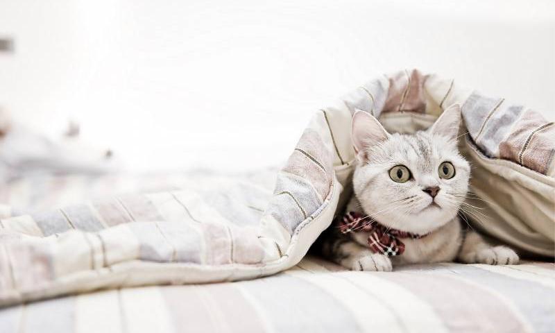 Одеяло всесезонное: что это такое, плотность, какое выбрать