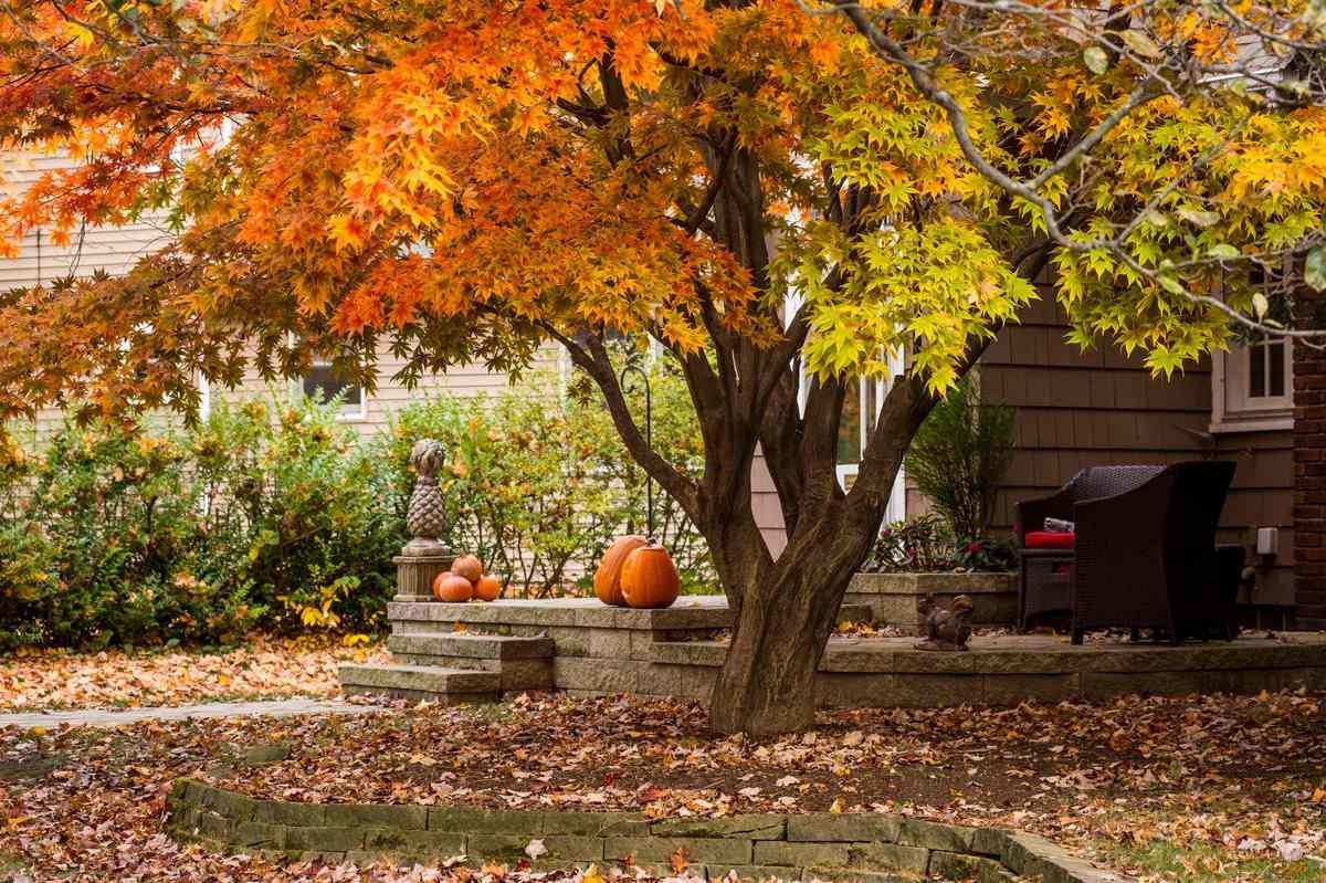 Что делать с опавшими листьями осенью