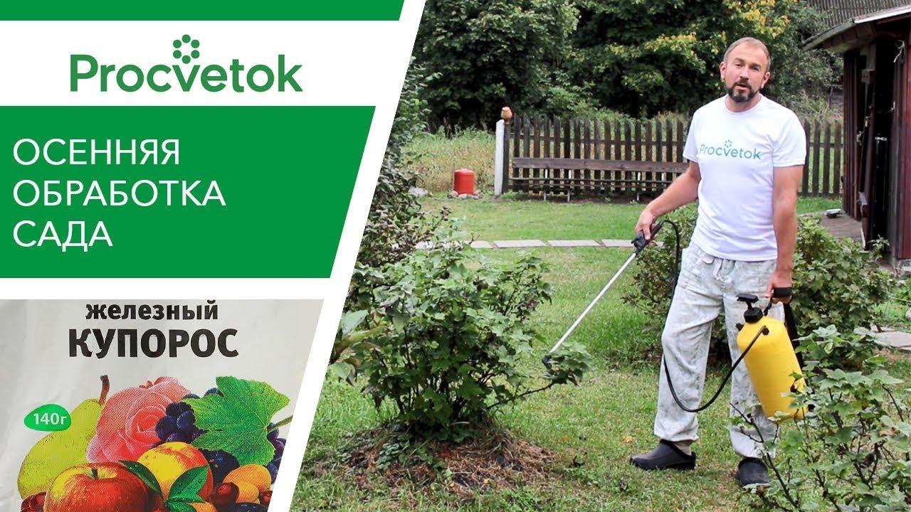 4 обязательных весенних обработки сада от болезней и вредителей. препараты для опрыскивания, время проведения. фото — ботаничка.ru