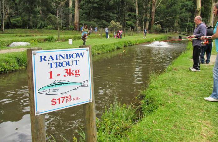 Свой бизнес: выращивание и разведение форели в пруду