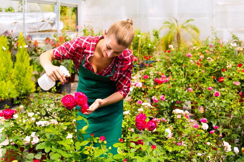 ᐉ как правильно обработать розы на зиму
