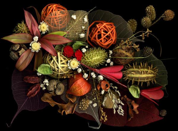 Популярные растения сухоцветы: фото и названия - топ 10 - agroflora.ru