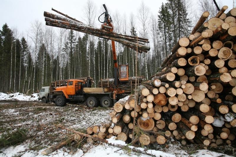 Как можно бесплатно получить лес от государства на строительство