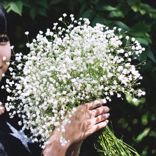 Сухоцветы фото и названия