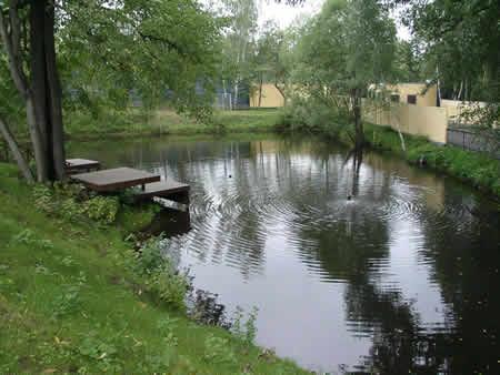 Свой бизнес: выращивание и разведение форели в пруду :: businessman.ru
