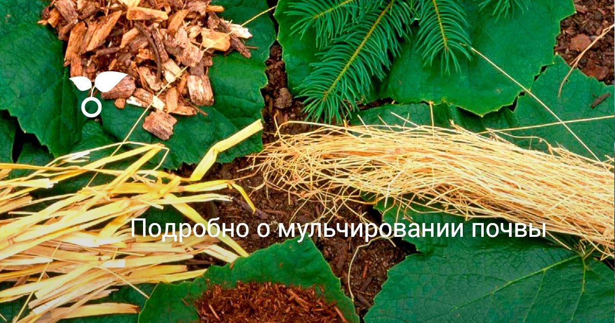 Что такое мульчирование и как мульчировать почву. органическая мульча