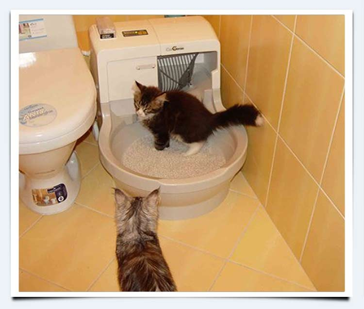 Кошачий туалет без запаха – возможно?