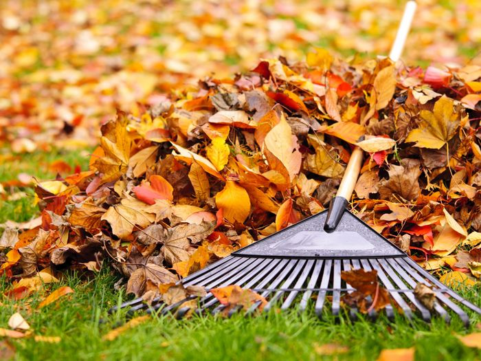 чем обработать осенью плодовые деревья и кустарники