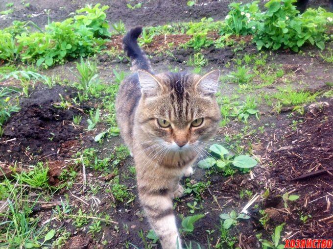 Как избавиться от блох в квартире, где живет кот, самостоятельно в домашних условиях: лучшие средства и способы