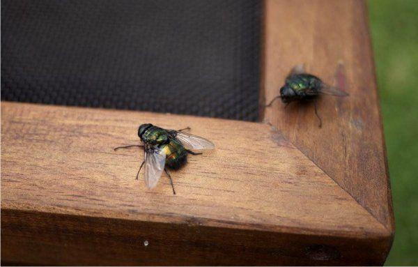 мухи осенью лезут в дом что делать