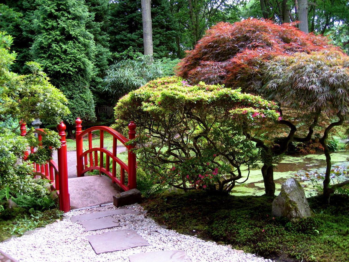 декоративные деревья для дачи