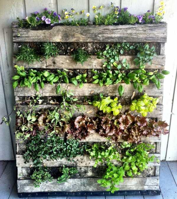 Живые картины из растений на стену (45 фото): как сделать зеленые, виды, посадка, уход