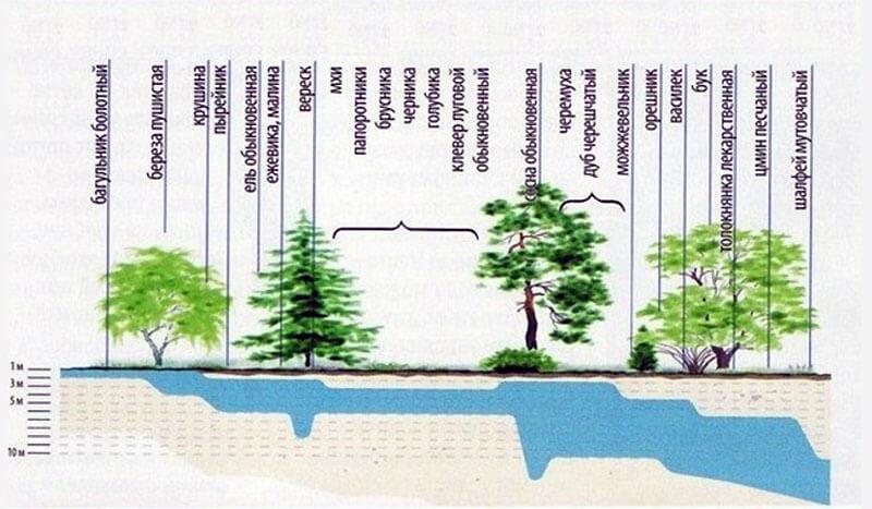 Подземные воды по условиям залегания: виды и формы, схема, где залегают грунтовые, безнапорные, межпластовые и другие