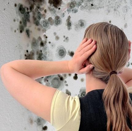Виды и свойства грунтовки против грибка и плесени