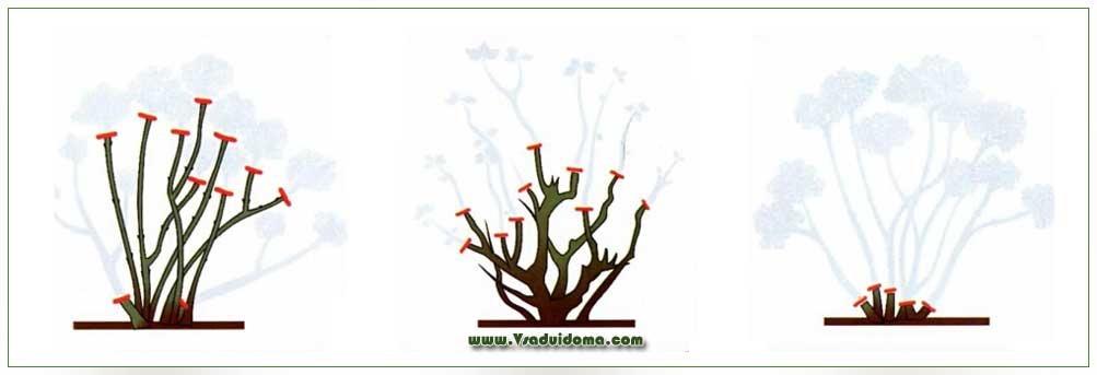 Гортензия древовидная: обрезка осенью на зиму, посадка и уход за растением, а также размножение черенками selo.guru — интернет портал о сельском хозяйстве