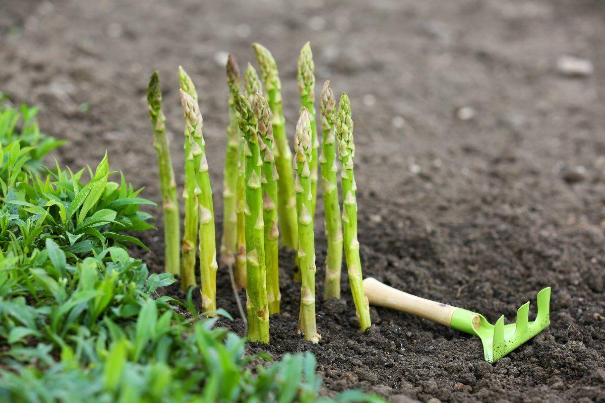 органическое земледелие на даче