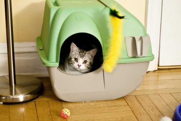 лоток для котов