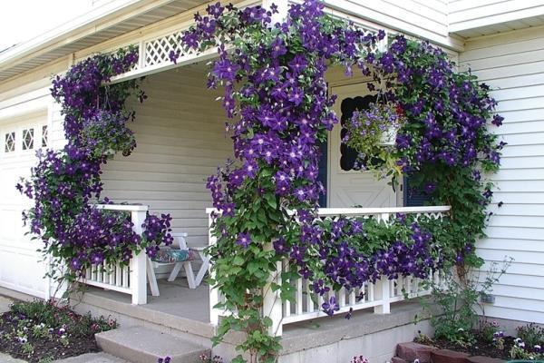 Лианы для сада — необычное оформление и красивый дизайн из множество разных видов!