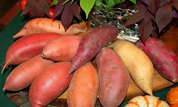 Батат: что это за овощ и с чем его едят