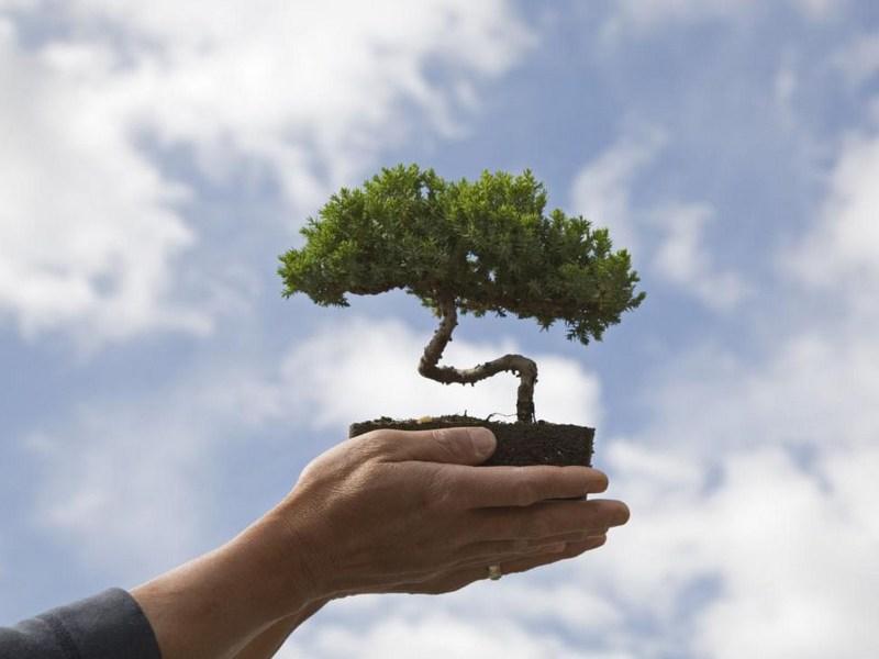 Бонсай своими руками: как сделать поэтапно, из сосны и из денежного дерева, мастер класс, из обыкновенной пошагово, изготовление
