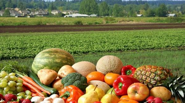 Как применить органическое земледелие на своем участке