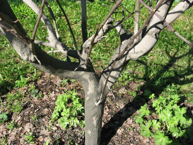 Подкормка яблонь осенью удобрениями и обработка от вредителей