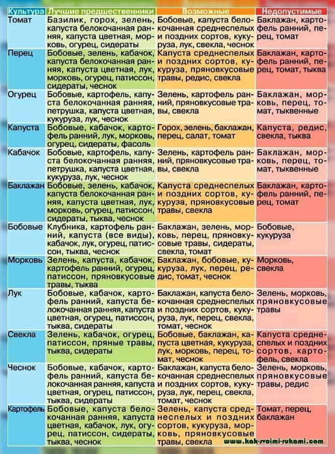 соседство овощей на грядках таблица совместимости
