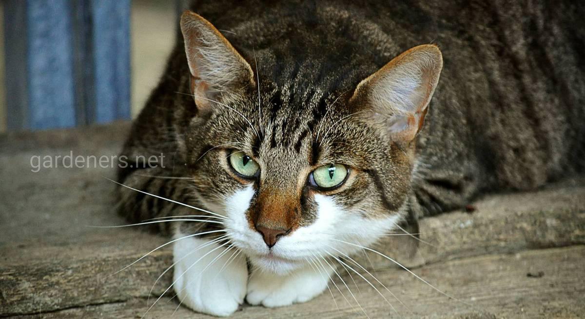 Как отвадить котов от участка без вреда для животных