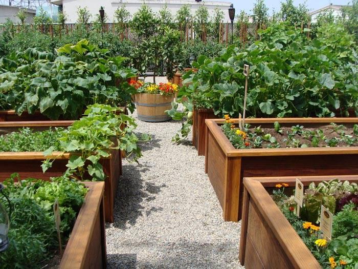 ширина грядок в огороде