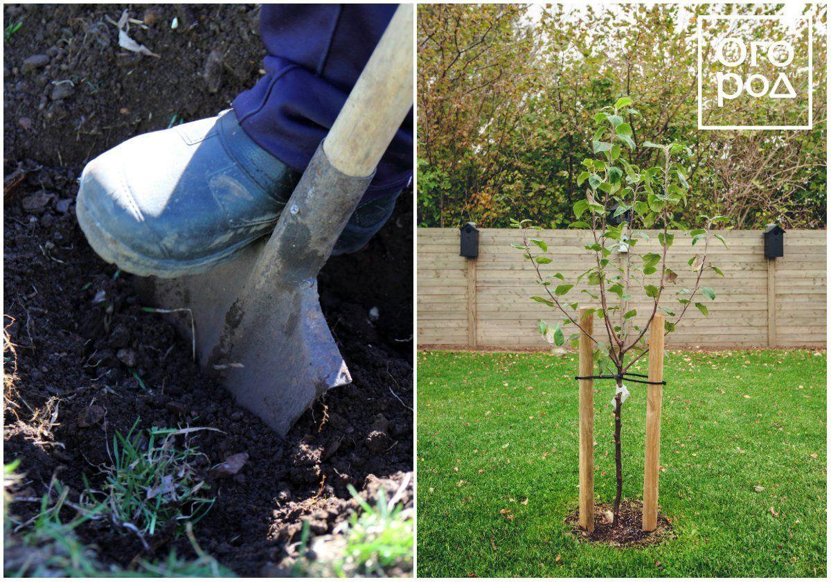 Когда лучше сажать яблони в средней полосе: в каком месяце, благоприятные дни для посадки – zelenj.ru – все про садоводство, земледелие, фермерство и птицеводство