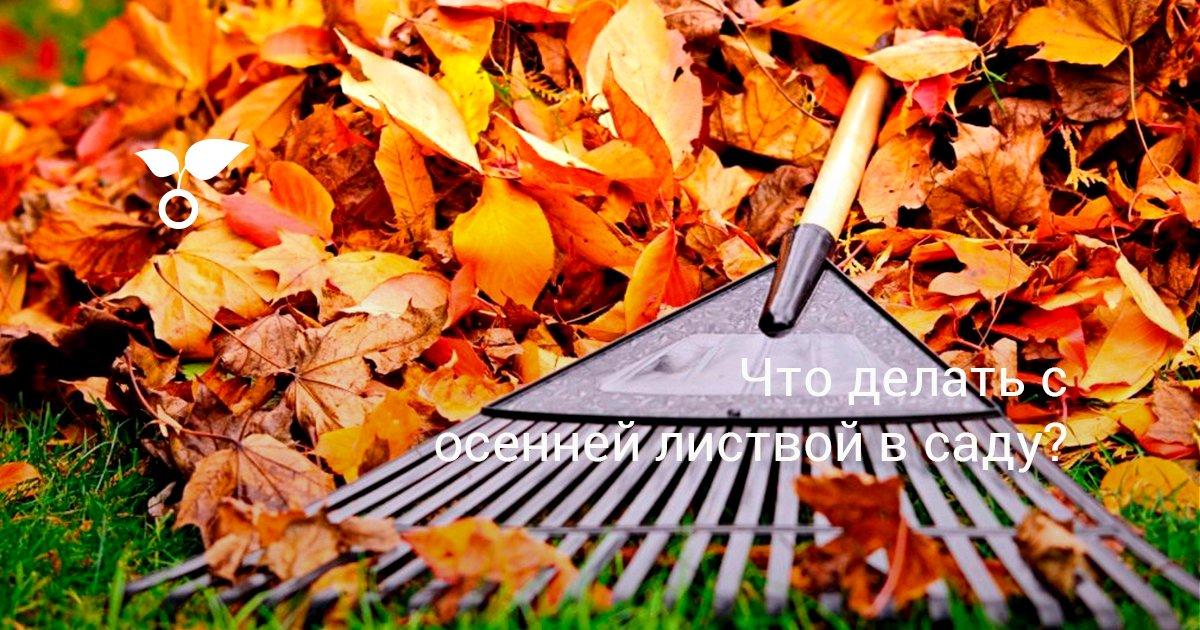 Нужно ли убирать растительные остатки из сада и огорода осенью?