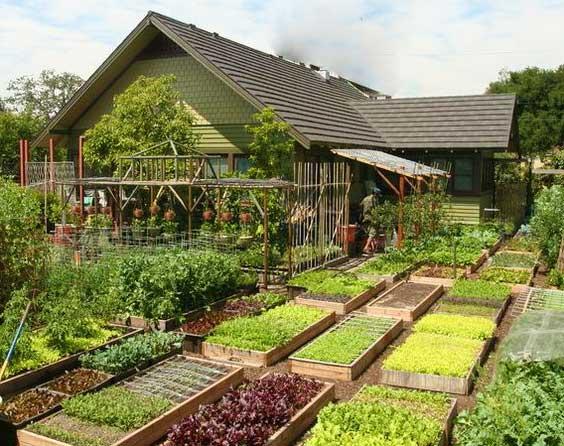 Дизайн сада и огорода в частном загородном доме: идеи для обустройства и озеленения дачного участка  - 39 фото