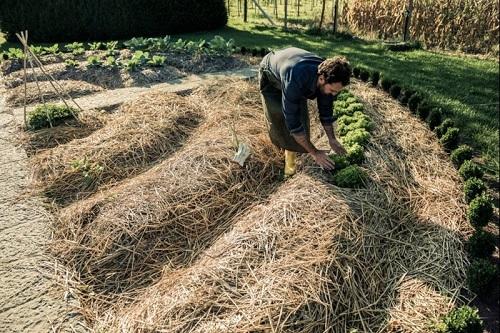 что такое мульча для огорода
