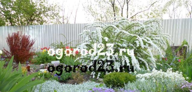 Влаголюбивые растения: примеры цветов и кустарников, правила посадки и ухода на даче
