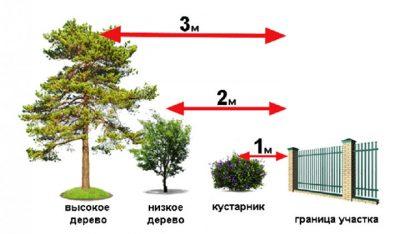 на каком расстоянии сажать деревья