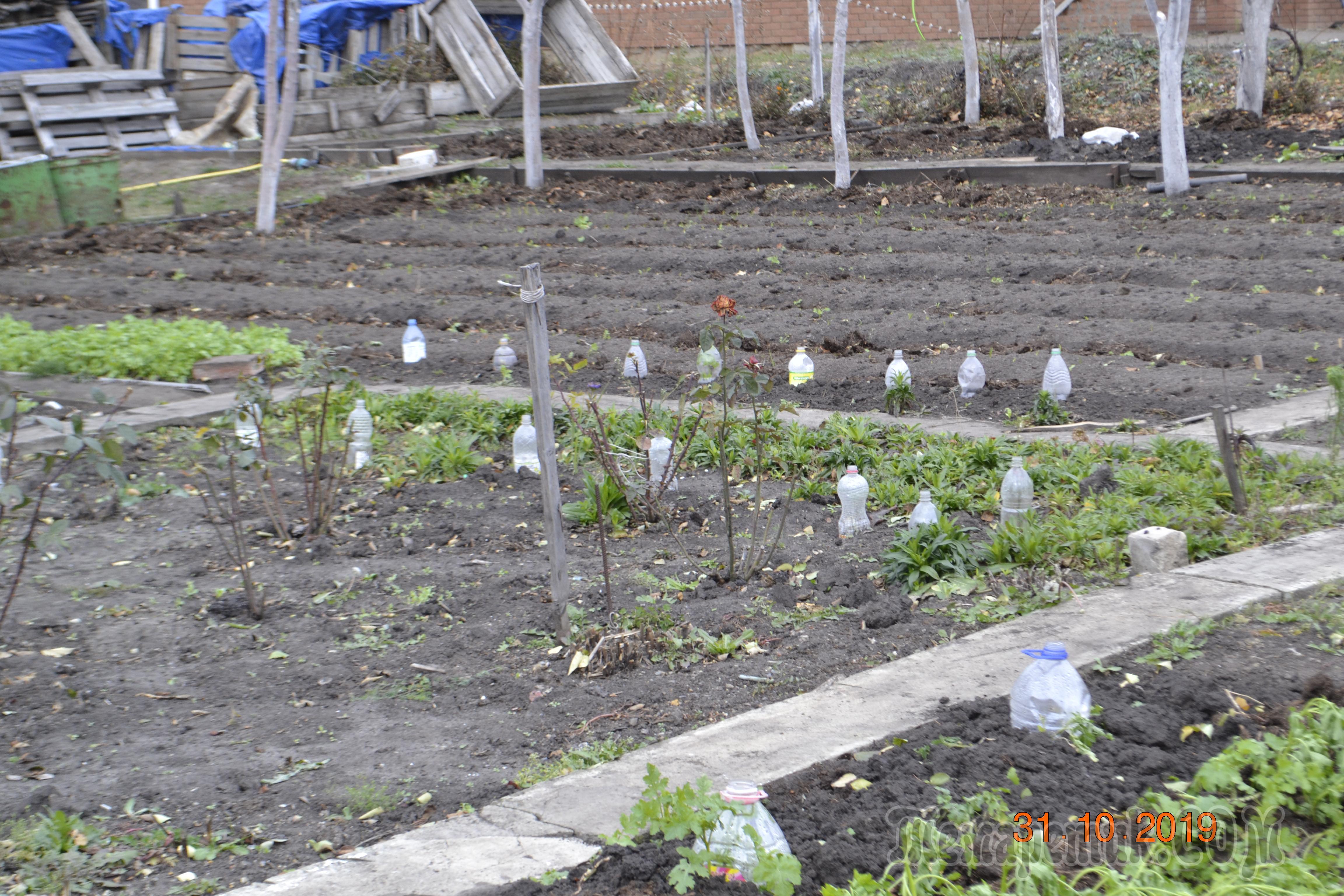 Огород без хлопот рф. органическое земледелие – сад и огород без хлопот для разумно-ленивых | дачная жизнь