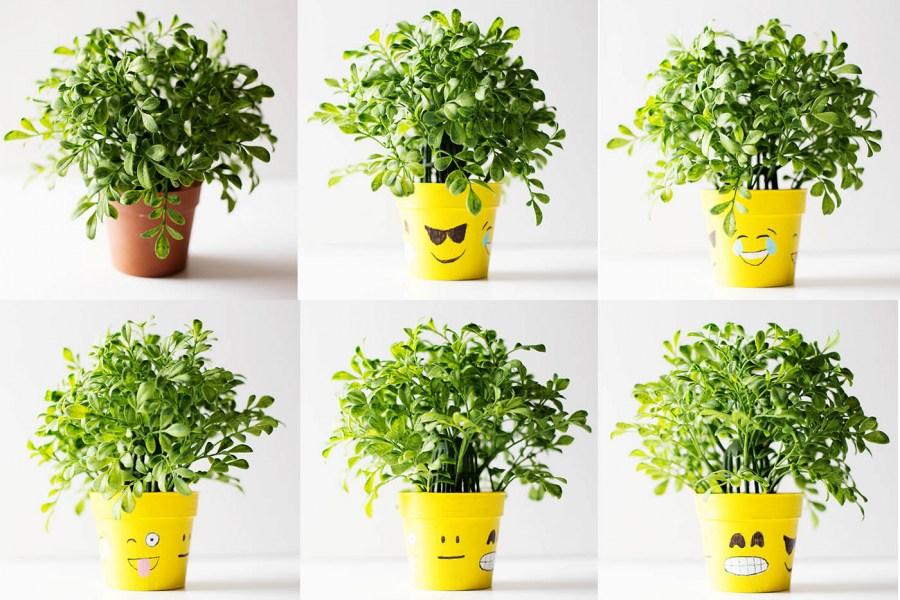 Цветочные горшки: 65 фото самых удивительных вариантов дизайна