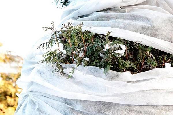 Какие цветы укрывать на зиму и как это правильно делать | сайт о саде, даче и комнатных растениях.