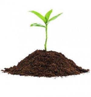 характеристика почвы