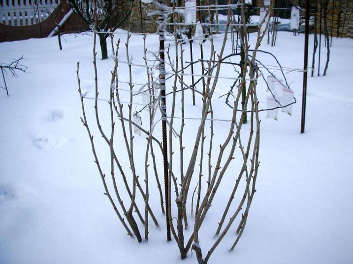уход за малиной осенью подготовка к зиме