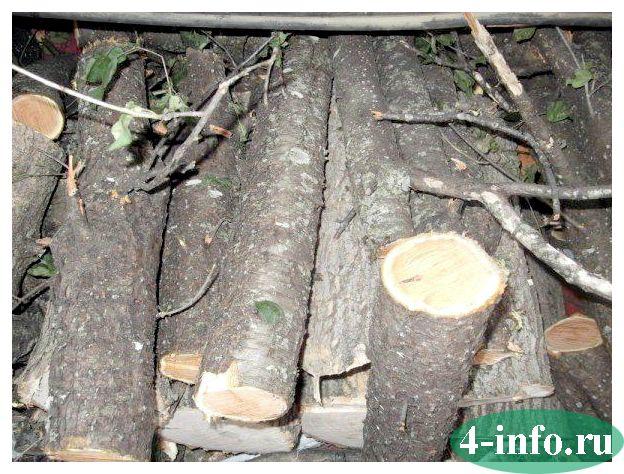разрешение на спил дерева