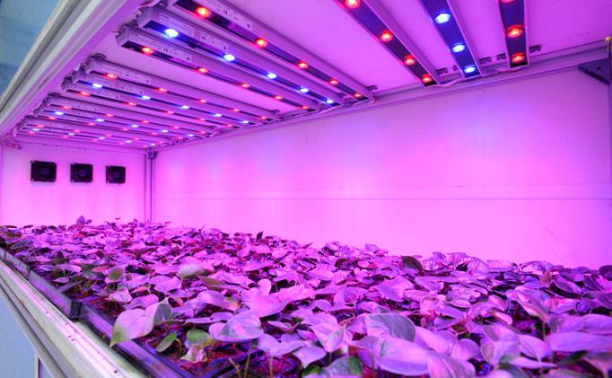 лампа для выращивания растений в домашних условиях