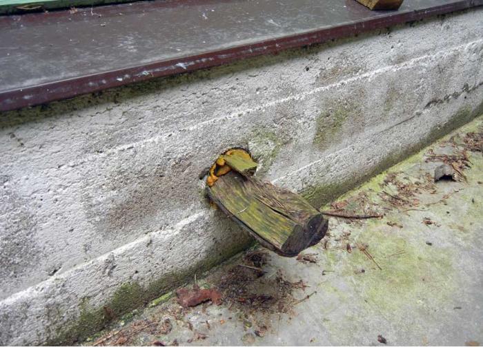 Устройство и монтаж продухов в фундаменте деревянного дома